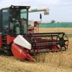 大麦刈取り